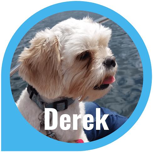 Derek - White Dog